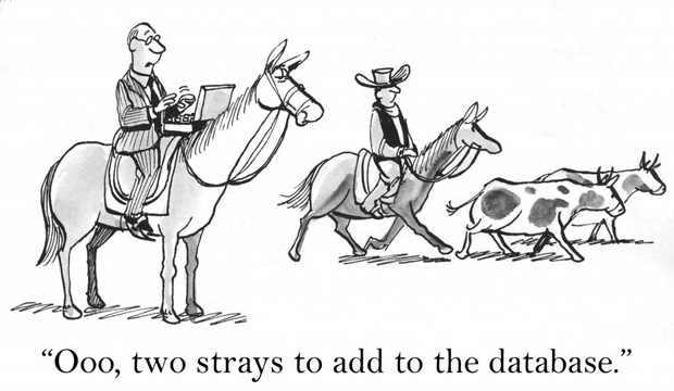 cartoon_strays-in-database